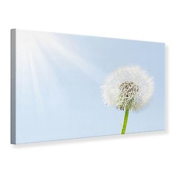 Canvas Print Dandelion In Sunbeam