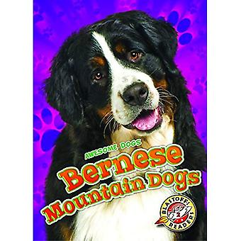 Bernese Mountain Dogs (Awesome Dogs)