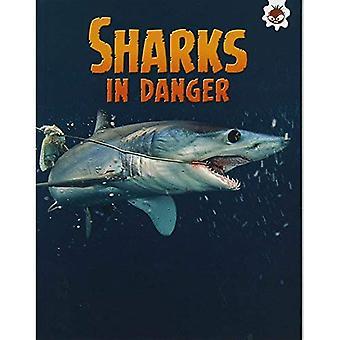 Shark! Sharks in Danger