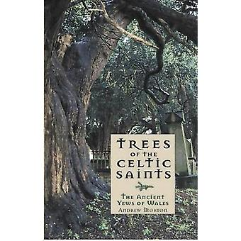 Trees of the Celtic Saints - the Ancient Yews of Wales by Andrew Mort