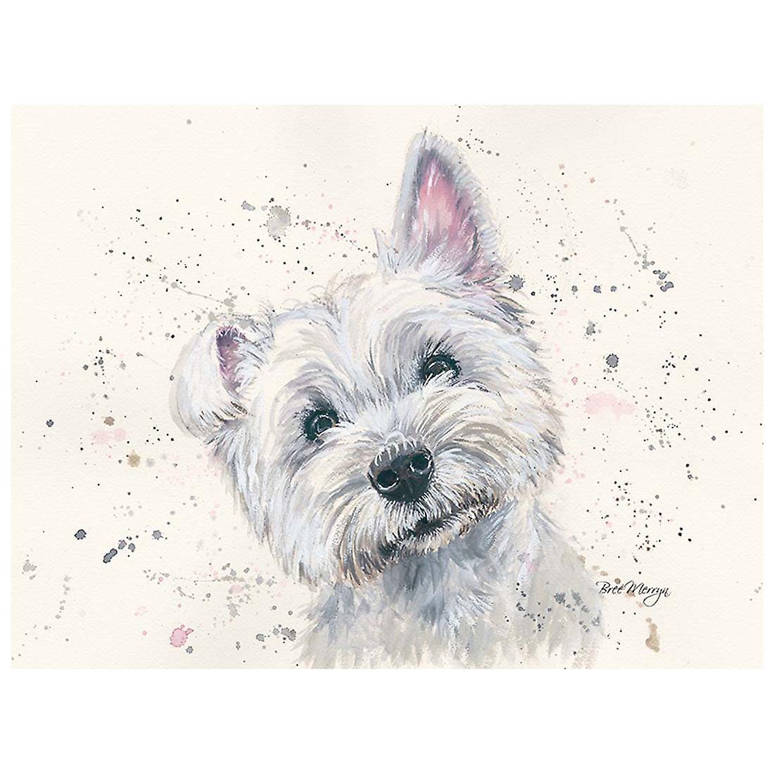 Bree Merryn Canvas Cutie, Fergal