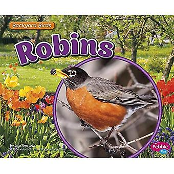 Robins (Backyard Birds)