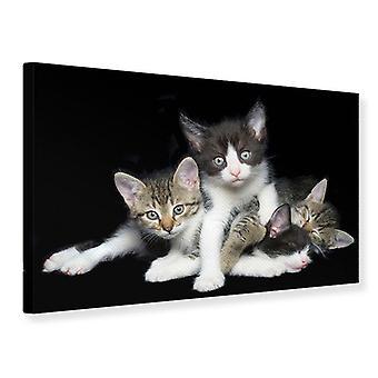 Cuarteto de gato impresión de lienzo