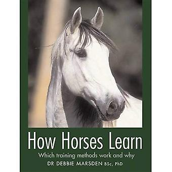 How Horses Learn [Illustrated]