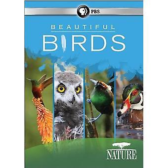 Karakter: Smukke fugle [DVD] USA importerer