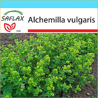 Saflax - Gift Set - 100 seeds - Lady's Mantle - Alchémille commune - Erba stella - Pie de león - Frauenmantel