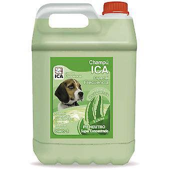 Ica Frequency Shampoo 5 Lts Aloe Vera (Dogs , Grooming & Wellbeing , Shampoos)