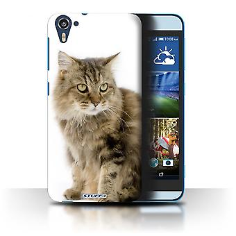 STUFF4 Case/Cover for HTC Desire 826/Ragamuffin/Cat Breeds
