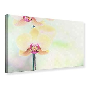 Canvas Print Lovely Orchid