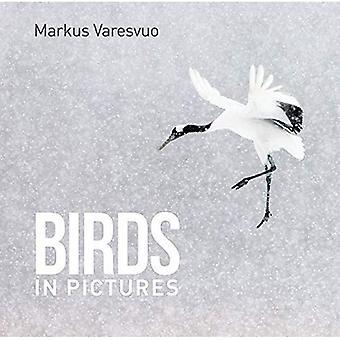 Fåglar i bilder