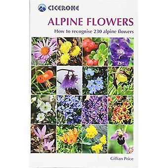 Alpina blommor
