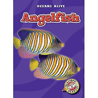 Angelfish (Blastoff! Readers: Oceans Alive)