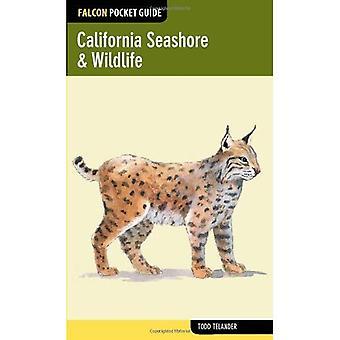 California Seashore & Wildlife (Falcon Pocket Guides)