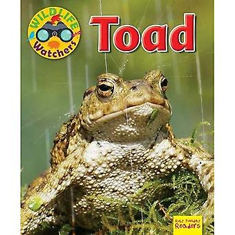 Wildlife Watchers: Toad: 2017 (Ruby Tuesday Readers)