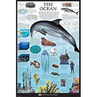 Ocean - Dorling Kindersley Poster Poster Print