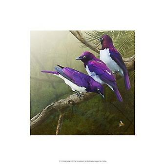 African Starlings Poster Print by Chris Vest (13 x 19)