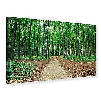 Canvas Print Pine Forest