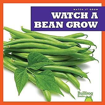 Watch a Bean Grow