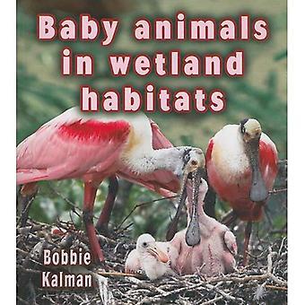 Baby dieren in Wetland Habitats