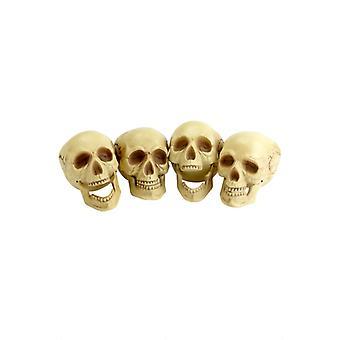 頭蓋骨、4 ピース、自然な色
