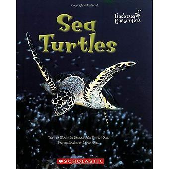 Sea Turtles (Undersea Encounters)