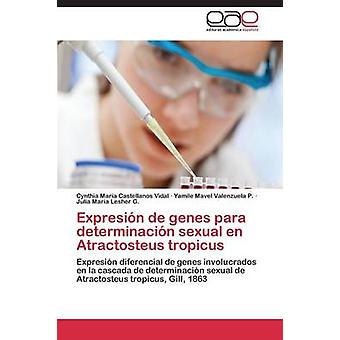 Expresin de Gene Para Determinacin sexuelle de Atractosteus Tropicus von Castellanos Vidal Cynthia Mara