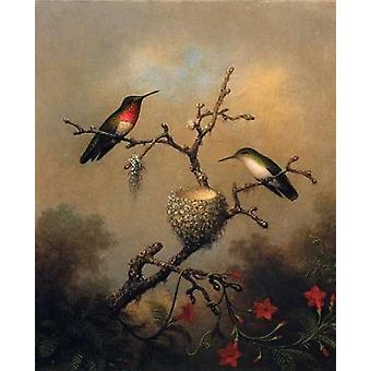 Ruby Throated Hummingbird Poster Print by  Martin Johnson Heade