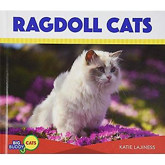 Ragdoll Cats (Big Buddy Cats)