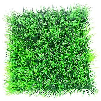 Betta Choice Zwerg Hairgrass Mat 25 X 25cm