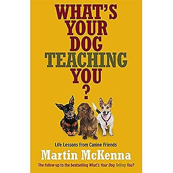 What's Your Dog Teaching You? Life Lessons From Canine Friends