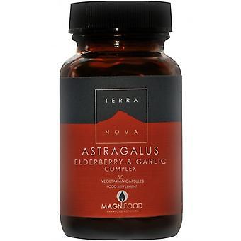 Terranova Astragalus, Elderberry & Garlic Complex Vegicaps 50 (T1773)