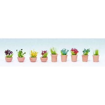 NOCH 14084 N Ornamental plants