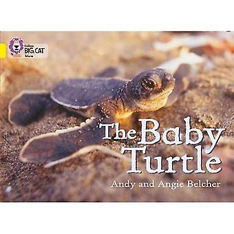 The Baby Turtles: Band 03/Yellow (Collins Big Cat)