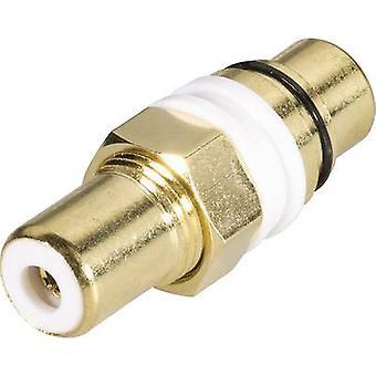 Prise RCA Adaptateur RCA (phono) - RCA (phono) électronique BKL 1103052 1 PC (s) de la socket