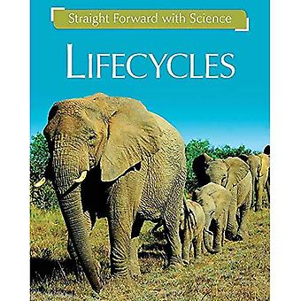 Straight Forward with Science: Life Cycles (Straight Forward with Science)