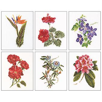 Floral Studies 1 On Aida Counted Cross Stitch Kit 6 3 4