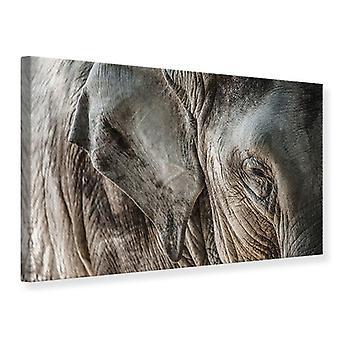 Canvas Print Close Up Elephant