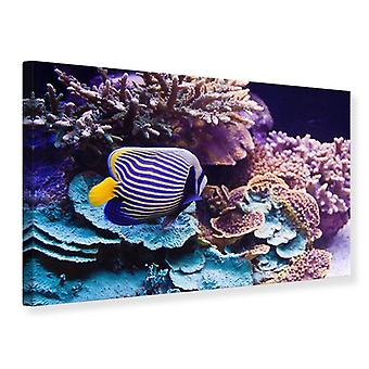 Canvas Print fascinatie onderwater