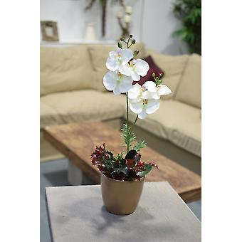 Christmas Orchid in Gold Pot