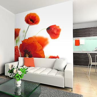 Wallpaper - Poppies on the wihite background