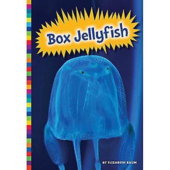 Box Jellyfish (Poisonous Animals)