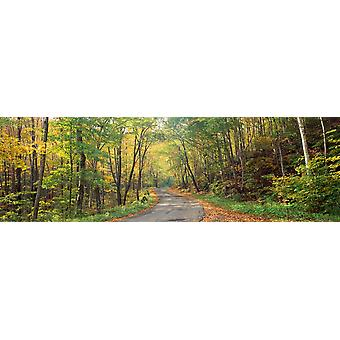 Road passing through autumn forest Golf Link Road Colebrook New Hampshire USA Poster Print