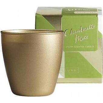 ILLUME Demi Boxed Glass Chanterelle Moss Candle