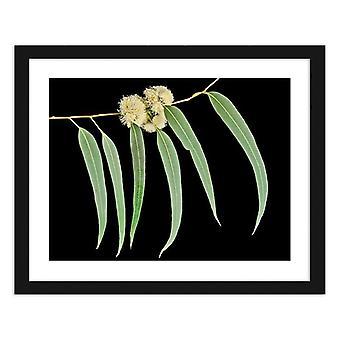 Picture In Black Frame, Eucalyptus Leaves