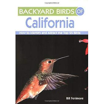 Backyard Birds of California: How to Identify and Attract the Top 25 Birds (Backyard Birds Of...)