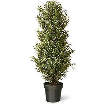 The National Tree Artificial 48inch Argentea Plant with Growers Pot