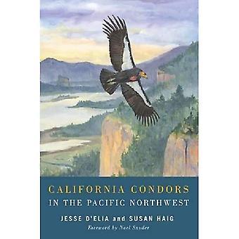 California Condors in the Pacific Northwest