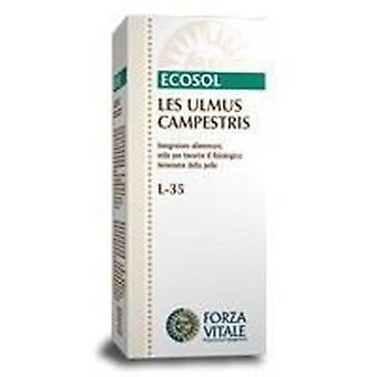 Forza Vitale Les Ulmus campestris Olmo 50Ml. (Herbalist's , Natural extracts)