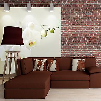 Wallpaper - orquídea blanca