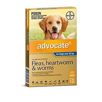 Advocate 6 Pack X Large Dogs over 25kg